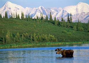 Travel from Vancouver to Fairbanks and enjoy the majestic beauty of Alaska!